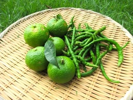 【うめちゃんの発酵教室】青柚子胡椒と酵素ジュース
